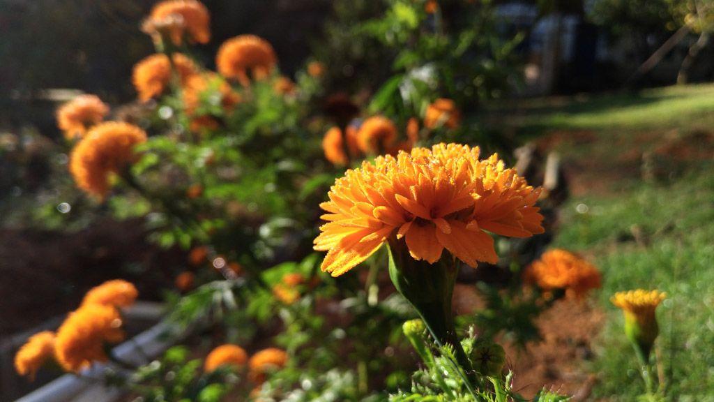 Flor - Antes