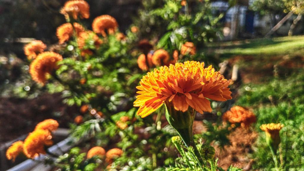Flor Depois