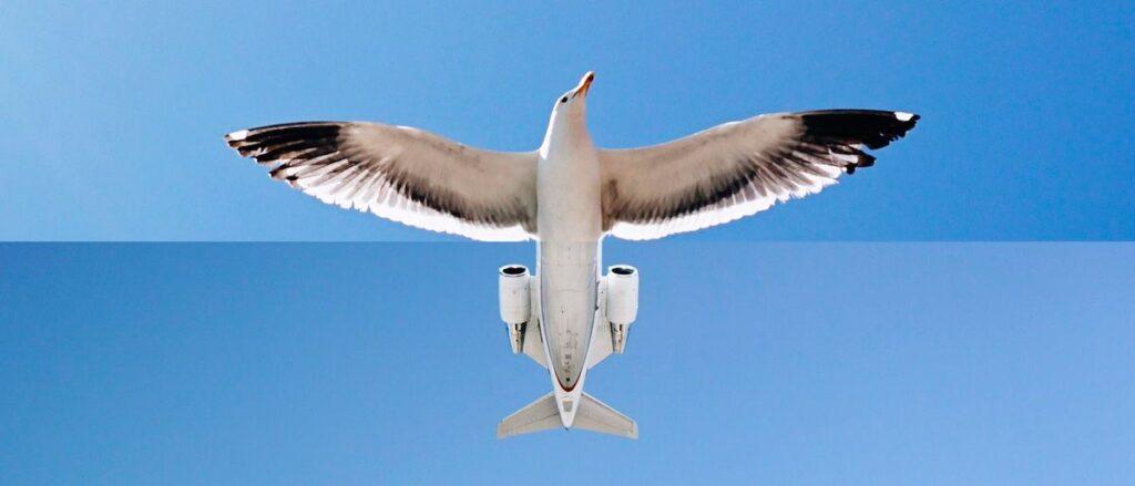 arte-mashup-aviao-capa