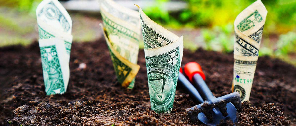 investimento-ou-gasto-plantando-dinheiro