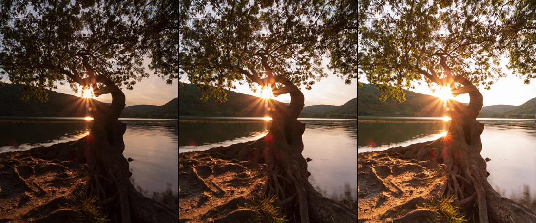 tripe-para-fotografia-de-paisagem-arvore-3imagens
