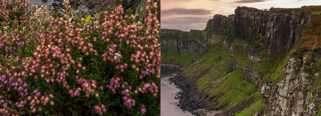 tripe-para-fotografia-de-paisagem-flores-sem-foco-pedras-com-foco